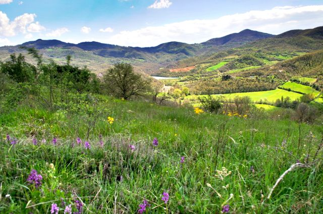Orchids and a spectacular view on the Migianella walk