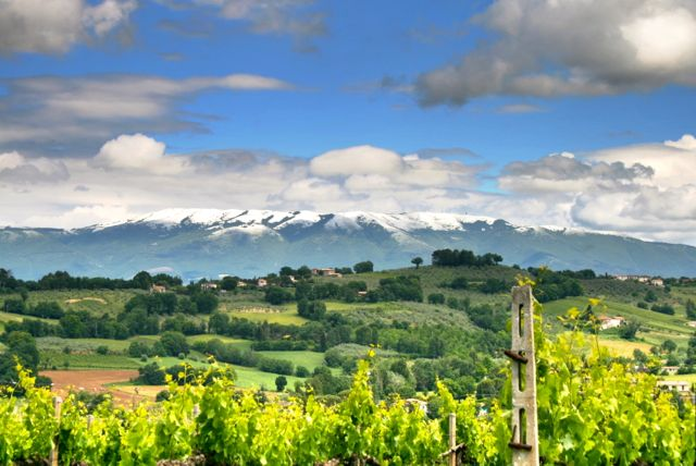 Late snow on the mountains seen from a Montefalco vineyard