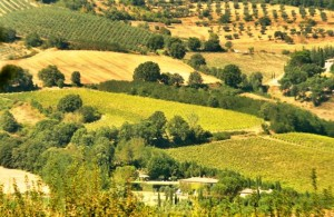 View towards Ursula's house and surrounding vineyards.