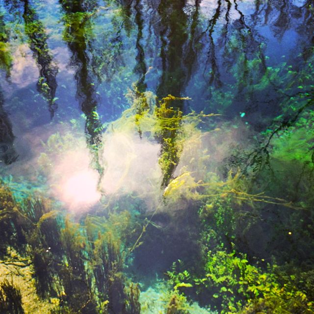 The crystal clear water of the Fonti del Clitunno