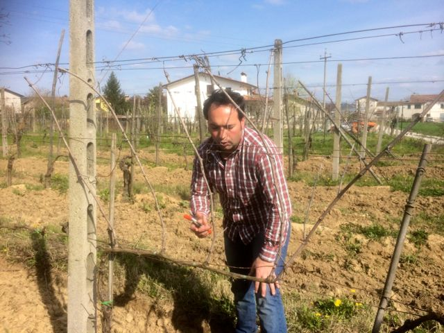Francesco Bianchini demonstrating how to prune a vine
