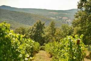 A View Of The Pian di Marte From The Preggio Vineyard, Umbria, Italy